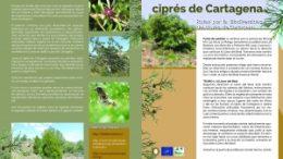 La senda del ciprés de Cartagena