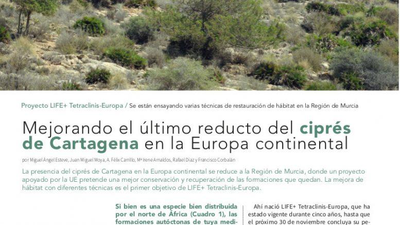 Mejorando el último reducto del ciprés de Cartagena en la Europa continental