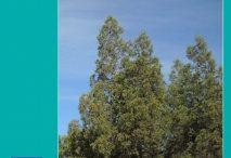 Tetraclinis articulata: biogeografía, ecología, amenazas y conservación