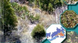 Manual de evaluaciónygestión del hábitat 9570* : bosquesdeTetraclinis articulata